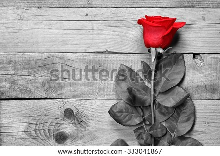 Red rose on black and white wooden background - stock photo