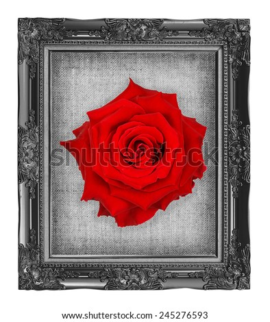 red rose on black frame with empty grunge linen canvas  beautiful vintage background - stock photo
