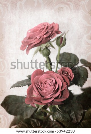 Red rose on paper - stock photo