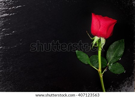Red rose over black stone background. Top view with copy space - stock photo