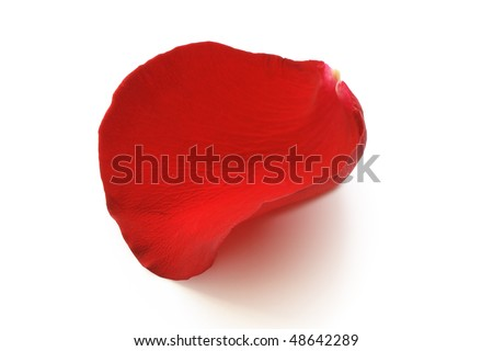 Red rose petal isolated on white background with clipping path - stock photo