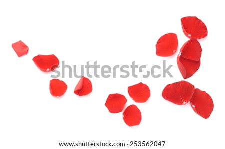 Red rose petals copyspace composition isolated over the white background - stock photo