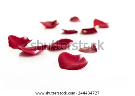 Red rose petals on white background - stock photo