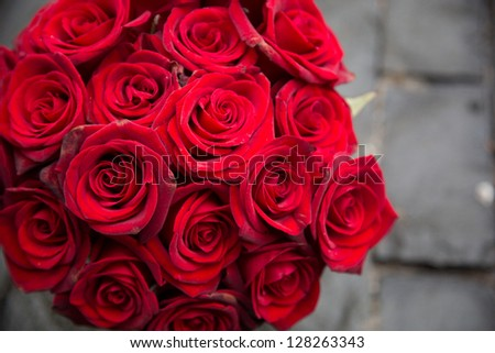red rose/red roses - stock photo