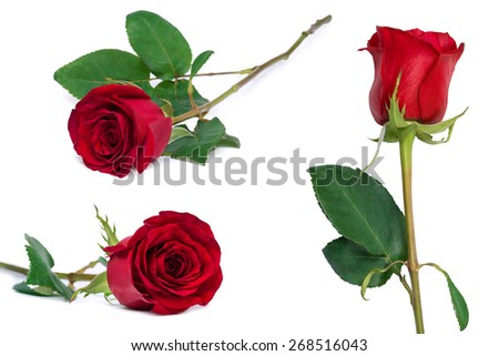 red rose set flower close-up isolated on white with clipping path included - stock photo
