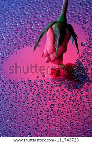 Red rose touching heart shaped reflection on water drops surface - stock photo