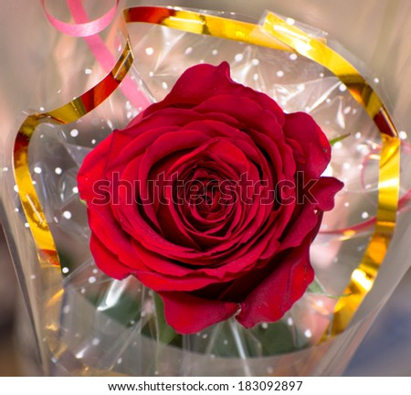 red rose with blurred background  - stock photo