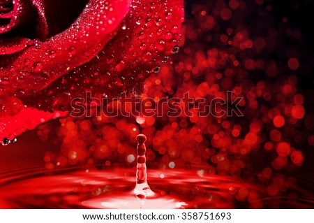 red rose with drop of water on a red bokeh background - stock photo