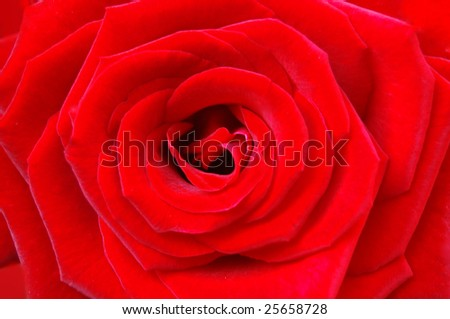 Red rose with heart symbol in center. - stock photo