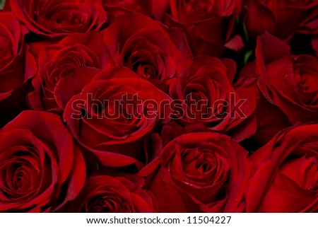 Red roses background, low DOF - stock photo