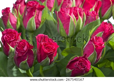 Red roses bouquet - stock photo