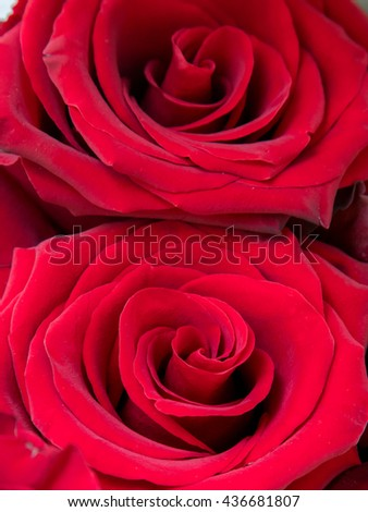 Red roses closeup background. Buds, petals of red roses macro photography. Red roses bouquet gift background. Love, romance, romantic passion, wedding and marriage ideas and concepts. Valentines day - stock photo