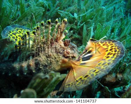 Red Sea Walkman fins - stock photo