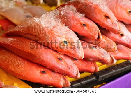 Red snapper fish  - stock photo