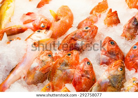 Red snapper fish in market - stock photo
