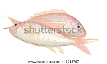 red snapper fish isolated on white - stock photo