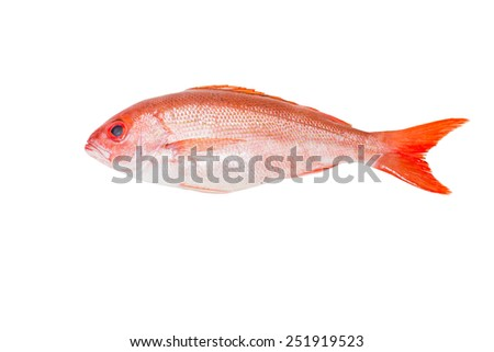 Red snapper whole fresh fish, Lutjanus campechanus, a species of snapper native to the western Atlantic Ocean including the Gulf Mexico. wild caught, product of USA, isolated on white background. - stock photo