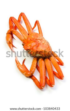 Pictures Of Red Snow Crab 52