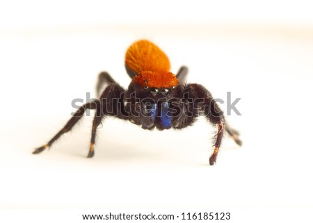 Red Spider - stock photo