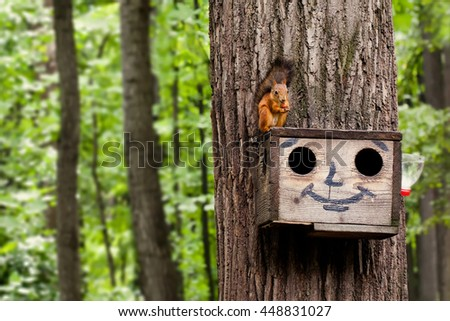 Red squirrel eating nuts on birdhouse. Wooden house with drawn comical funny face. summer forest background - stock photo