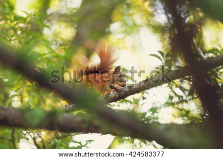 Red squirrel sitting on the tree in the park - stock photo