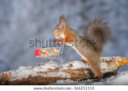 red squirrels with shopping cart and peanuts - stock photo