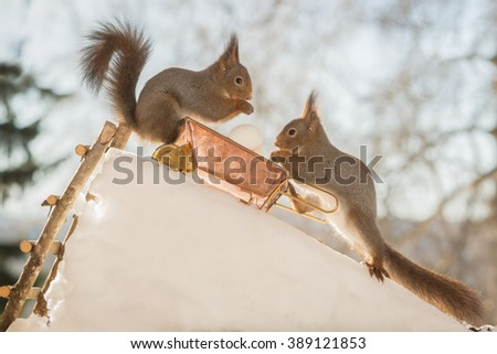 red squirrels with wheelbarrow and eggs on ice - stock photo