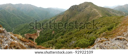 red stag in mountains - stock photo