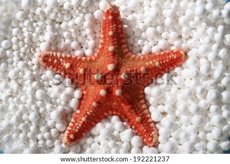 red starfish in styrofoam balls - stock photo
