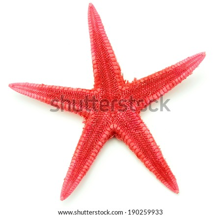 Red starfish, macro image and isolated on white background - stock photo