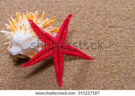 Red Starfish on the sandy beach  - stock photo