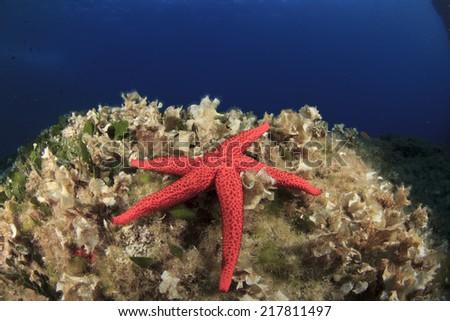 Red Starfish on underwater reef - stock photo