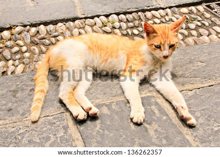 Red stray cat lying on the street of old town, Rhodes, Greece - stock photo