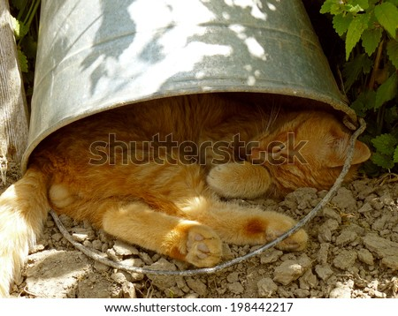 red tabby cat resting under the bucket in very hot summer day - stock photo
