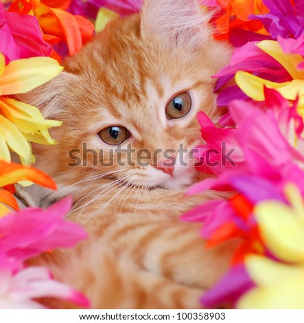 Red tabby kitten laying in flowers - stock photo