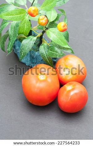 red tomatoes with green chilly. hot peppers. Artificial tomato plant model made of plastic. - stock photo