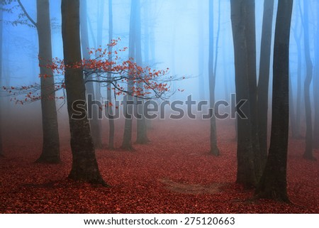 Red tree in blue foggy woods - stock photo
