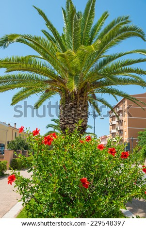 Red tropical flower hibiscus and palm tree on the background - stock photo