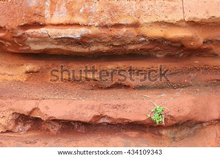 Red tuff, overgrown with a tussock of Sea Sandwort on the Atlantic island of Madeira; selected focus, narrow depth of field - stock photo