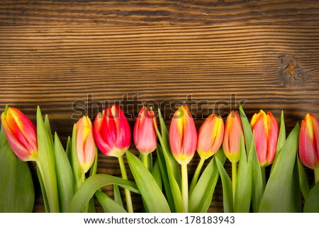 Red tulip blooms on wooden background - stock photo