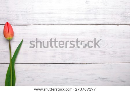 Red tulip flower on old white wooden table background. Top view with copy space. - stock photo