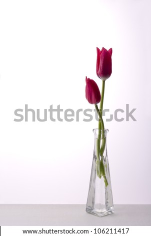 red tulip in flower vase on table - stock photo