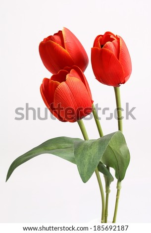 Red tulip with leave on a white background  - stock photo