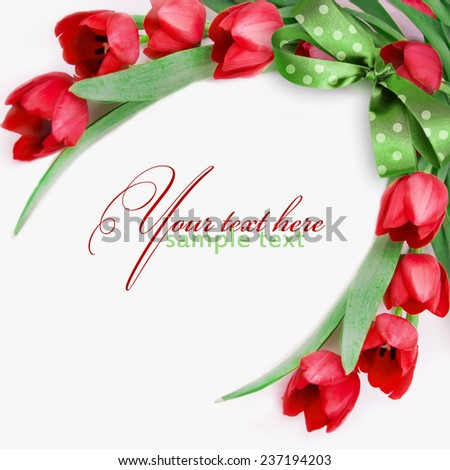 Red tulips on white. - stock photo