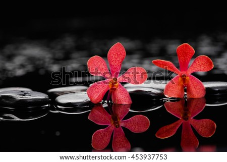 Red two orchid on wet black stones  - stock photo