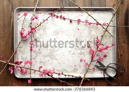 Red ume (Japanese apricot) blossoms with scissors on the silver tray - stock photo