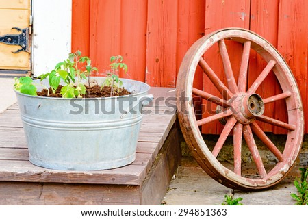 Red wagon wheel and zinc metal bucket with tomato plants in front of red wooden house. Retro style use of old vintage parts. - stock photo