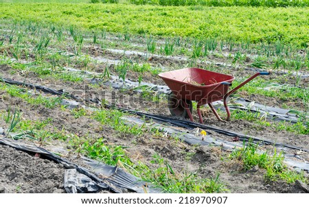 Red wheelbarrow amongst crops - stock photo
