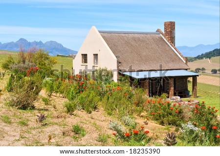 Red wild flowers in front of African wine farm house. Shot in Kuils River Winelands, near Stellenbosch/Cape Town, Western Cape, South Africa. - stock photo