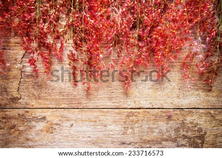 Red wild flowers on a wooden background - stock photo